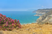 Flower bush on sea coast — Stock Photo