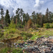 Garbage dump in forest — Stock Photo