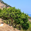 Typical nature landscape on Cyprus — Stock fotografie
