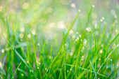Dew drops on green grass — Stock Photo