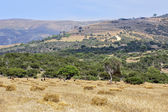 Typical cyprus rural landscape — Stock Photo