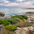 Rocky coastline in Cyprus — Stock Photo