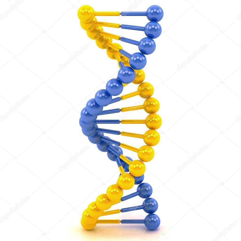 Молекула днк фото схема