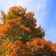 Royalty-Free Stock Photo: Bright autumn tree