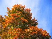 Bright autumn tree — Stock Photo