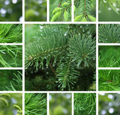 Coniferous tree with rain droplets collage — Stock Photo