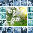 Spring collage — Stock Photo #12454783