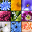 bloemen collage — Stockfoto