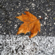 Royalty-Free Stock Photo: Autumn leaf on the road