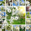 Spring trees collage — Stock Photo #12652025