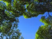 Rama de árboles en el fondo de cielo azul — Foto de Stock