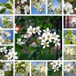 Spring trees collage — Stock Photo #12771577