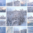 Winter collage — Stock Photo #12771647