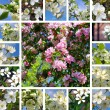 Spring trees collage — Stock Photo