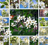 Spring trees collage — Foto Stock