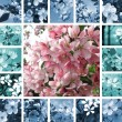 Spring collage — Stock Photo #12850730