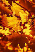 Branch of bright autumn maple foliage with water ripples — Stock Photo