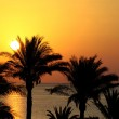 Silhouettes of palm trees above the sea and rising sun — Stock Photo #14616385