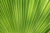Tropical plant leaf texture — Stock Photo