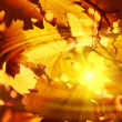 Branch of bright autumn maple foliage with water ripples and sun — Stock Photo #14769615