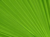 Tropical plant leaf closeup — Stock Photo