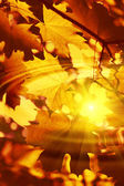 Branch of bright autumn maple foliage with water ripples and sun — Stock Photo