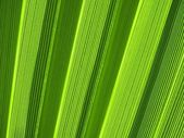 Tropical palm leaf texture — Stock Photo