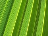Tropical palm leaf texture — Stockfoto