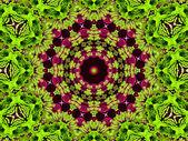 Chrysanthemum natural pattern — Stock Photo