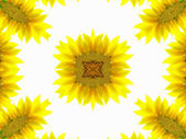 Abstract pattern of sunflower — Stock Photo