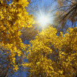 Beautiful autumn trees and sun — Stock Photo