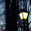 Street light and silhouettes of trees — Stock Photo