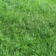 Green grass nature background — Stock Photo