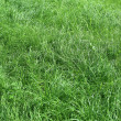 Green grass nature background — Stock fotografie