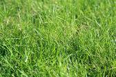 Frischen grünen gras — Stockfoto