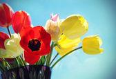 Bukiet kolorowych tulipanów — Zdjęcie stockowe