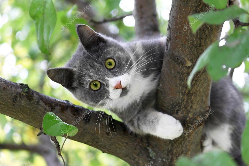 绿眼睛的猫 — 图库照片08dink101#50579473