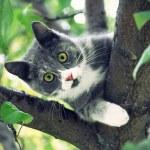 gatto con occhi verdi — Foto Stock #50866009