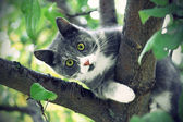 Cat with green eyes — Stock Photo