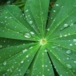 Large green leaf with water drops — Stock Photo #51297773