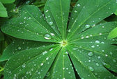 Large green leaf with water drops — Stockfoto