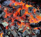żywo węgli — Zdjęcie stockowe