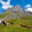 Mountain landscape with grazing cows — Stock Photo #25370181