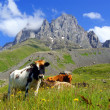 Mountain landscape with grazing cows — Stock Photo