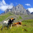 Mountain landscape with grazing cows — Stock Photo #27620645