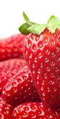 Strawberry — Foto Stock