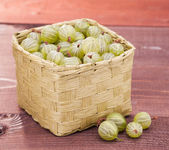Gooseberry — Photo