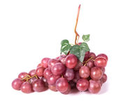 Bunch red grapes — Stock Photo