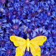 Spring blue cornflower with yellow butterfly — Stock Photo