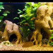 Ttropical freshwater aquarium with fishes — Foto Stock